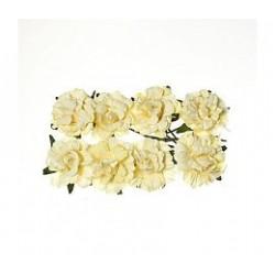 Fleurs (8) crème